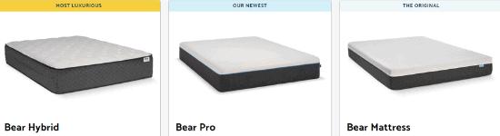 bear product